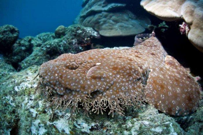 Самые страшные морские создания