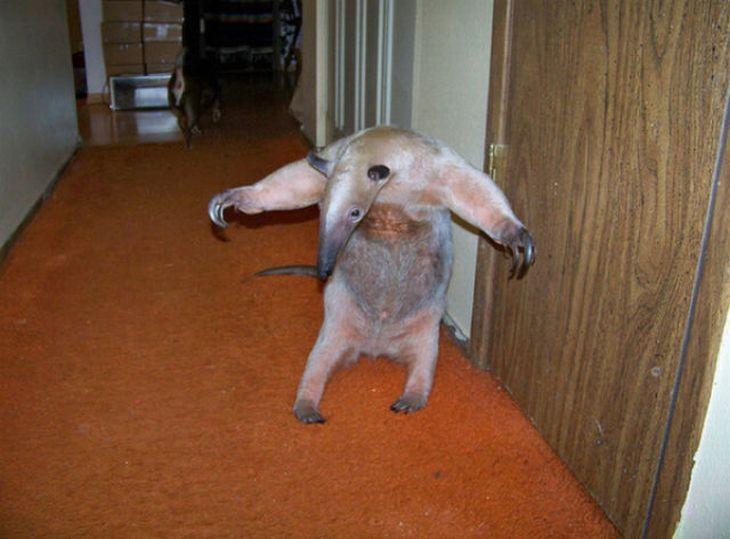 Маленькое животное в домашних условиях