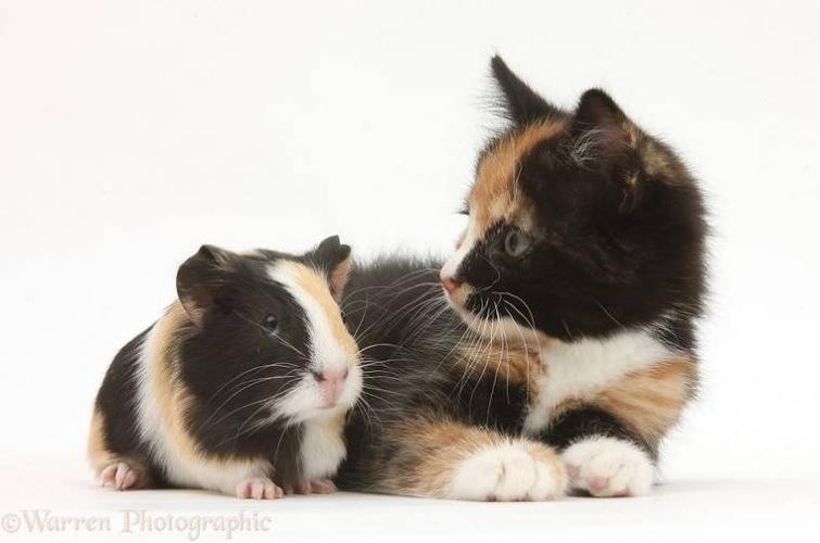 разные животные одного окраса