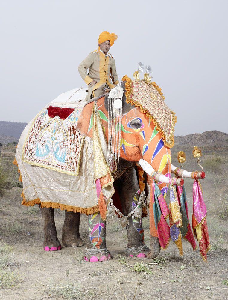 разрисованный живой слон