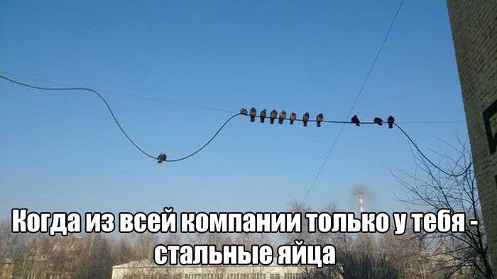 Прикольные картинки (108 фото) 09.01.2017