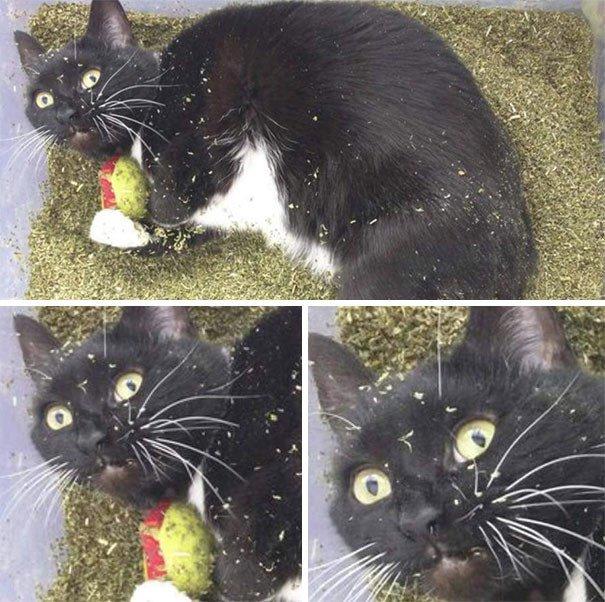 Коты-наркоманы (36 фото)